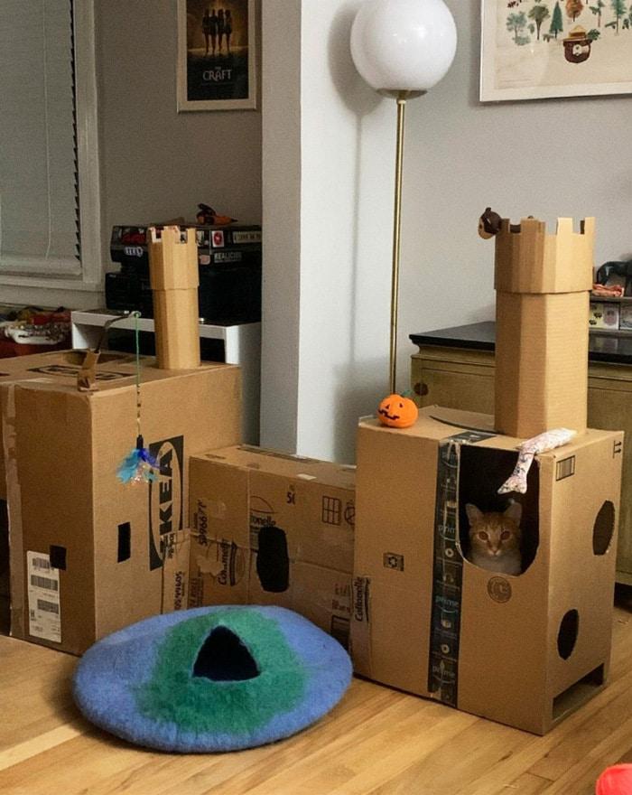 Com tédio na quarentena donos de gatos começaram a construir castelos de papelão 2