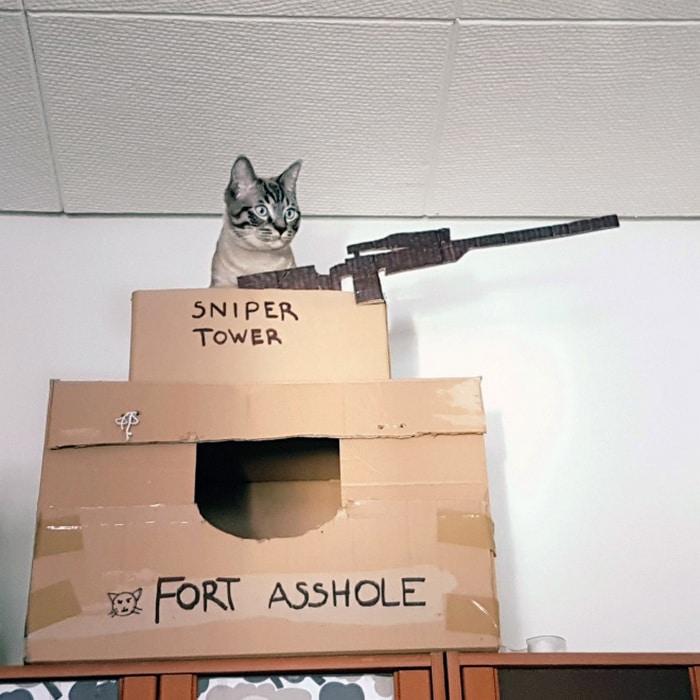 Com tédio na quarentena donos de gatos começaram a construir castelos de papelão 3
