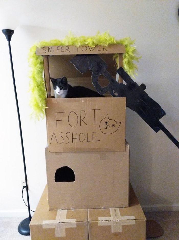 Com tédio na quarentena donos de gatos começaram a construir castelos de papelão 5