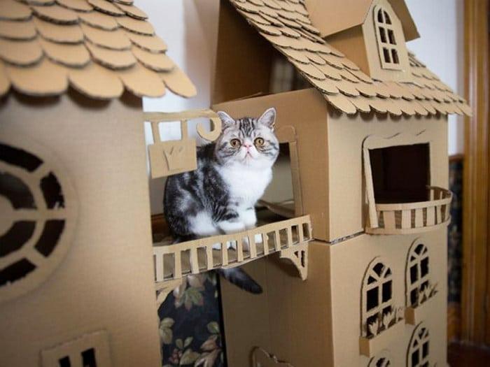 Com tédio na quarentena donos de gatos começaram a construir castelos de papelão 7