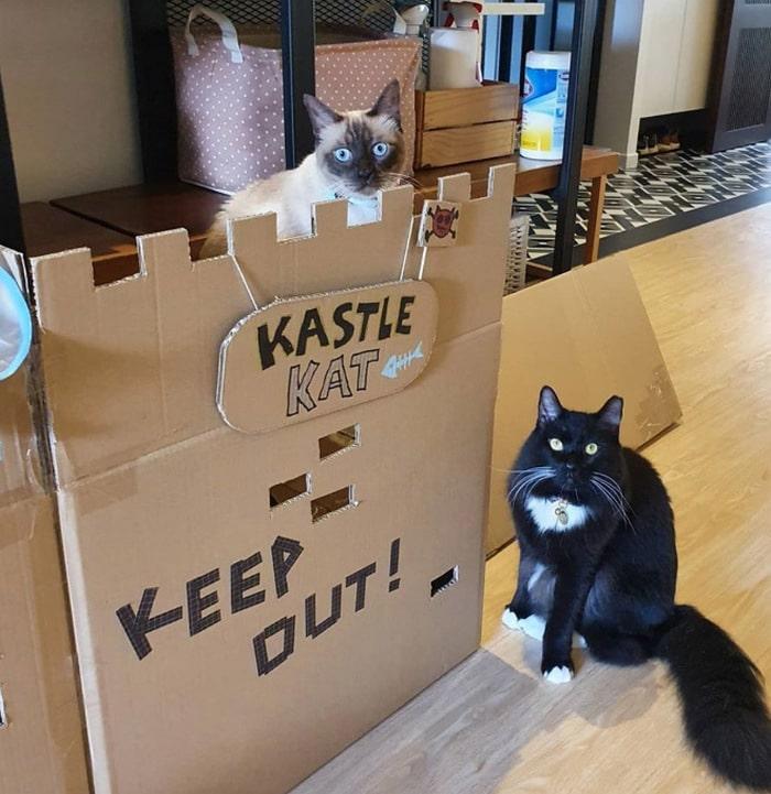 Com tédio na quarentena donos de gatos começaram a construir castelos de papelão 8