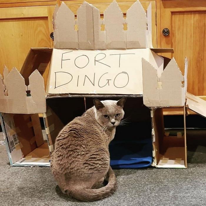 Com tédio na quarentena donos de gatos começaram a construir castelos de papelão 9