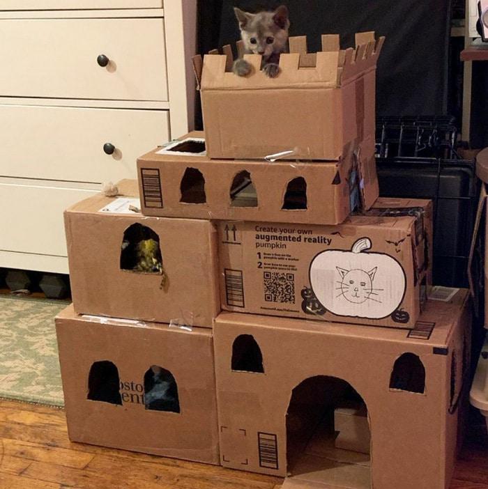 Com tédio na quarentena donos de gatos começaram a construir castelos de papelão 10