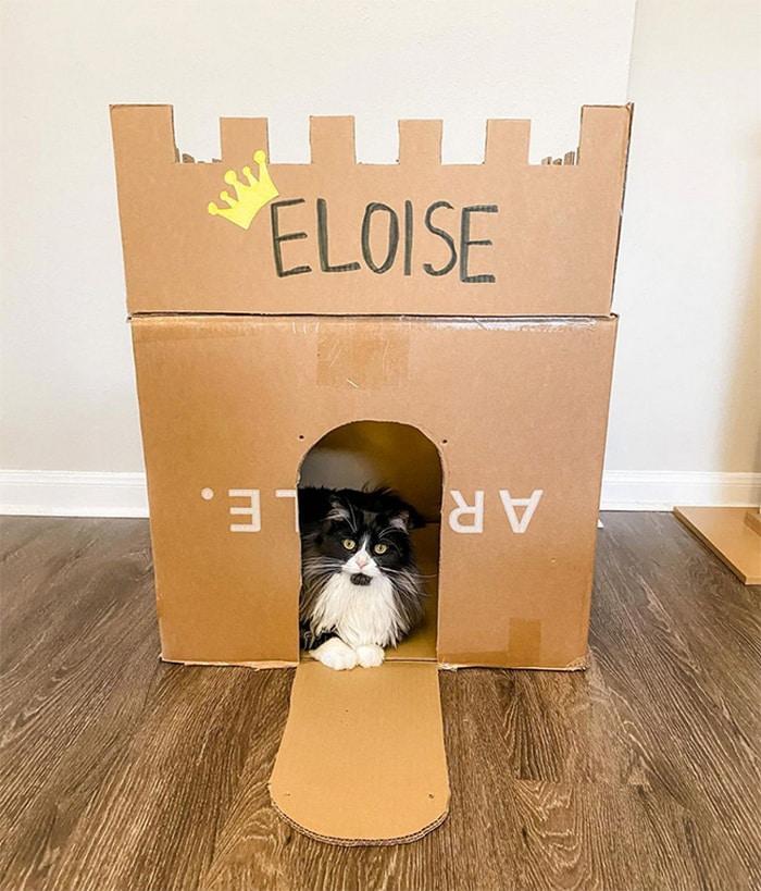 Com tédio na quarentena donos de gatos começaram a construir castelos de papelão 11
