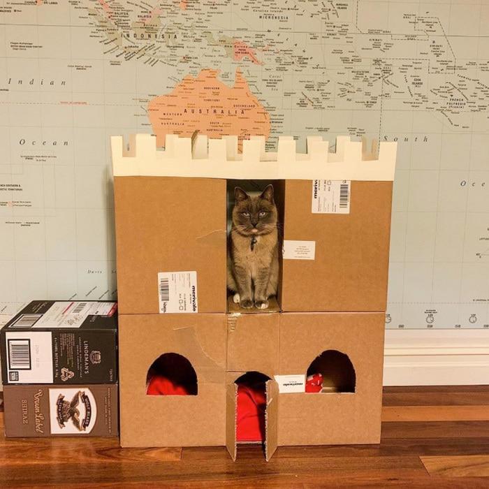 Com tédio na quarentena donos de gatos começaram a construir castelos de papelão 12