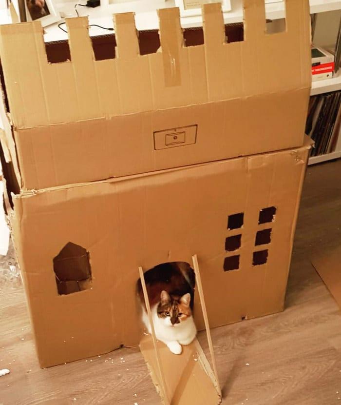 Com tédio na quarentena donos de gatos começaram a construir castelos de papelão 13
