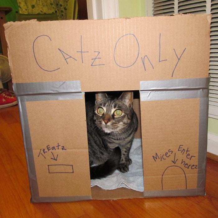 Com tédio na quarentena donos de gatos começaram a construir castelos de papelão 14