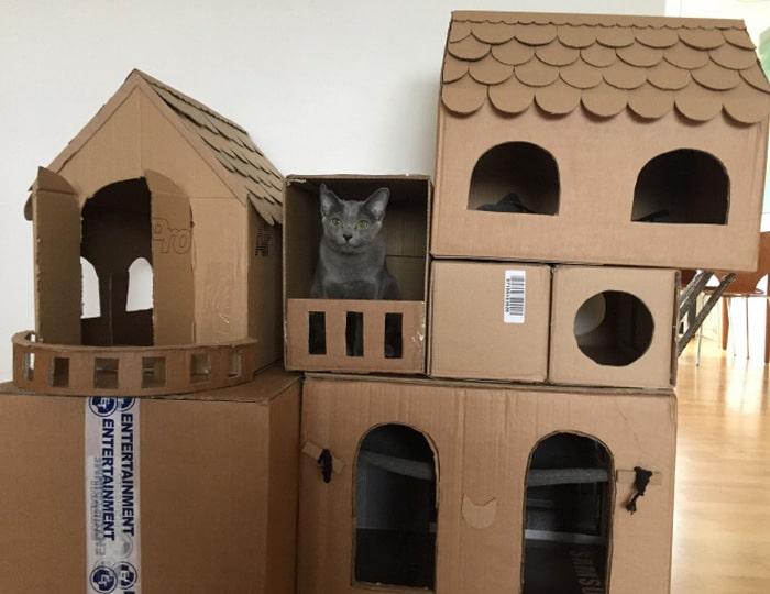 Com tédio na quarentena donos de gatos começaram a construir castelos de papelão 15