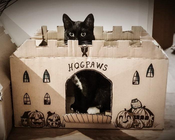 Com tédio na quarentena donos de gatos começaram a construir castelos de papelão 16