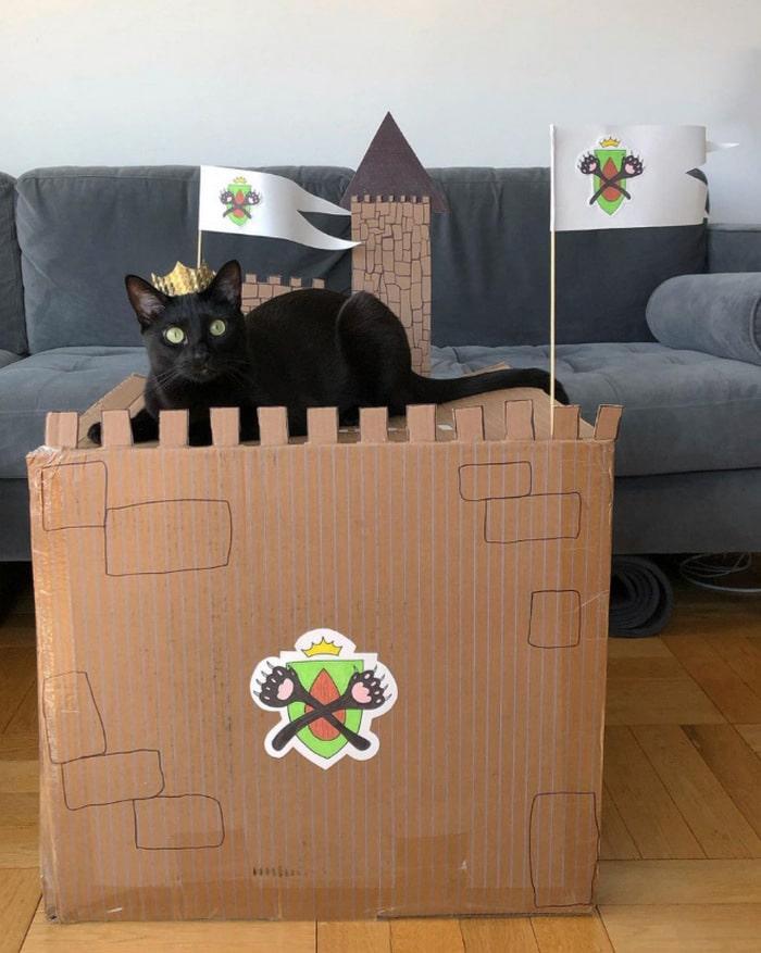 Com tédio na quarentena donos de gatos começaram a construir castelos de papelão 17