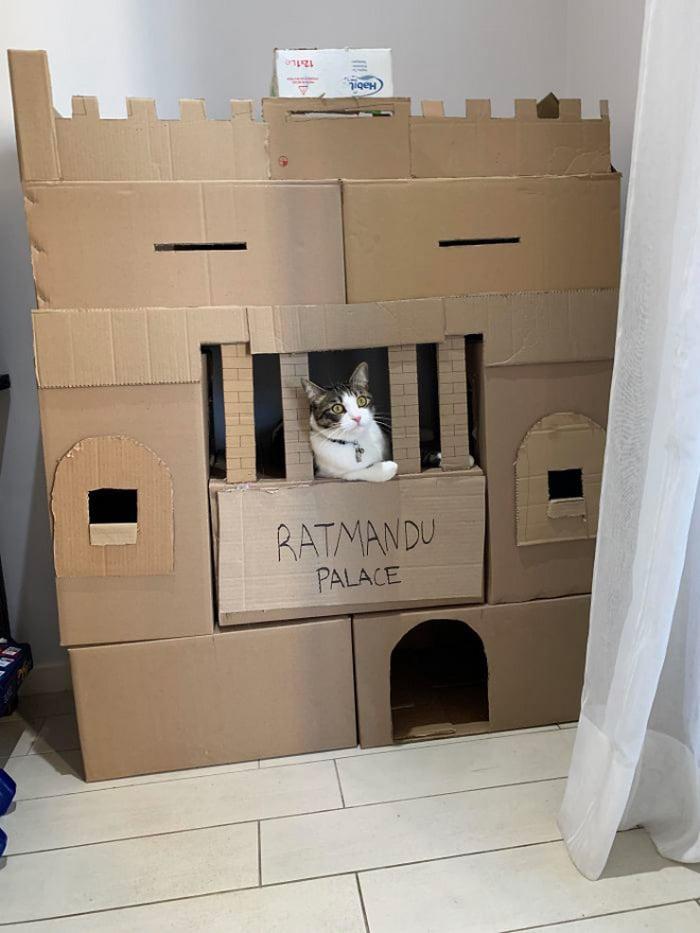 Com tédio na quarentena donos de gatos começaram a construir castelos de papelão 20