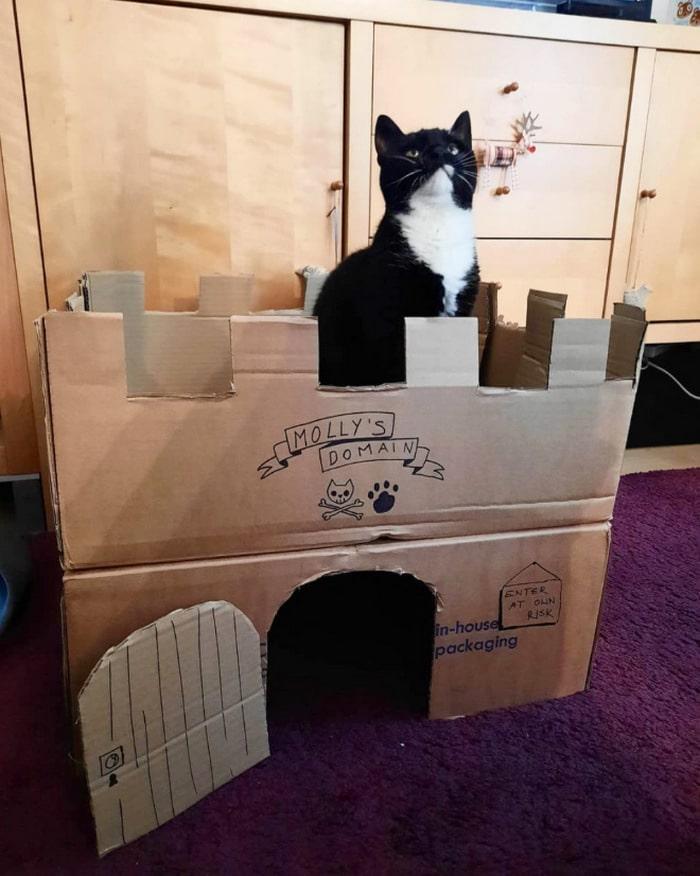 Com tédio na quarentena donos de gatos começaram a construir castelos de papelão 21