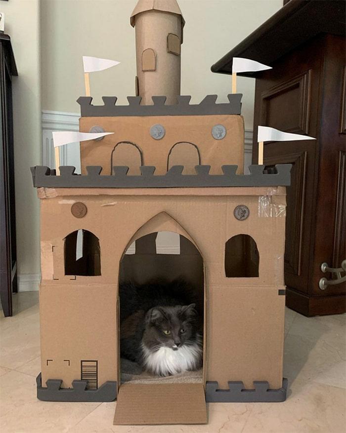 Com tédio na quarentena donos de gatos começaram a construir castelos de papelão 22