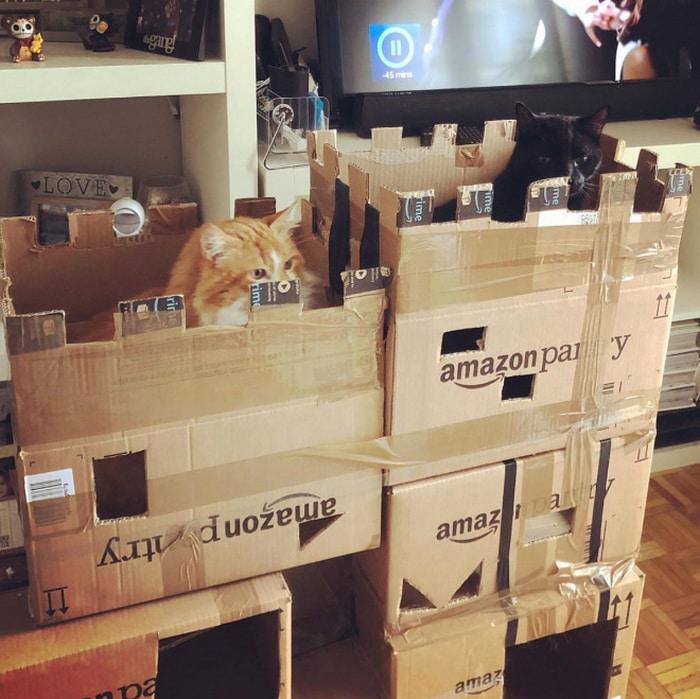 Com tédio na quarentena donos de gatos começaram a construir castelos de papelão 23