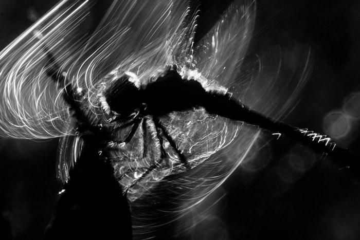 30 vencedores do concurso de fotografia close-up do ano de 2020 16