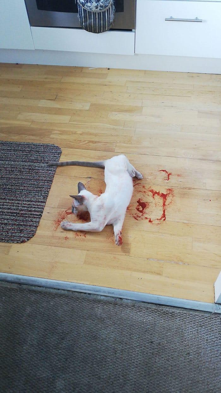 22 vezes que animais de estimação quase causaram um ataque cardíaco a seus donos 5