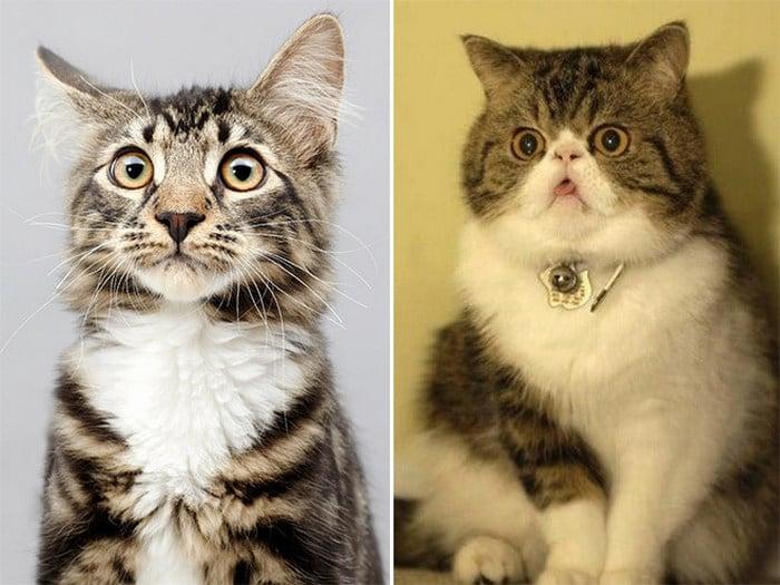 23 animais de estimação que acabaram de descobrir que foram adotados 19