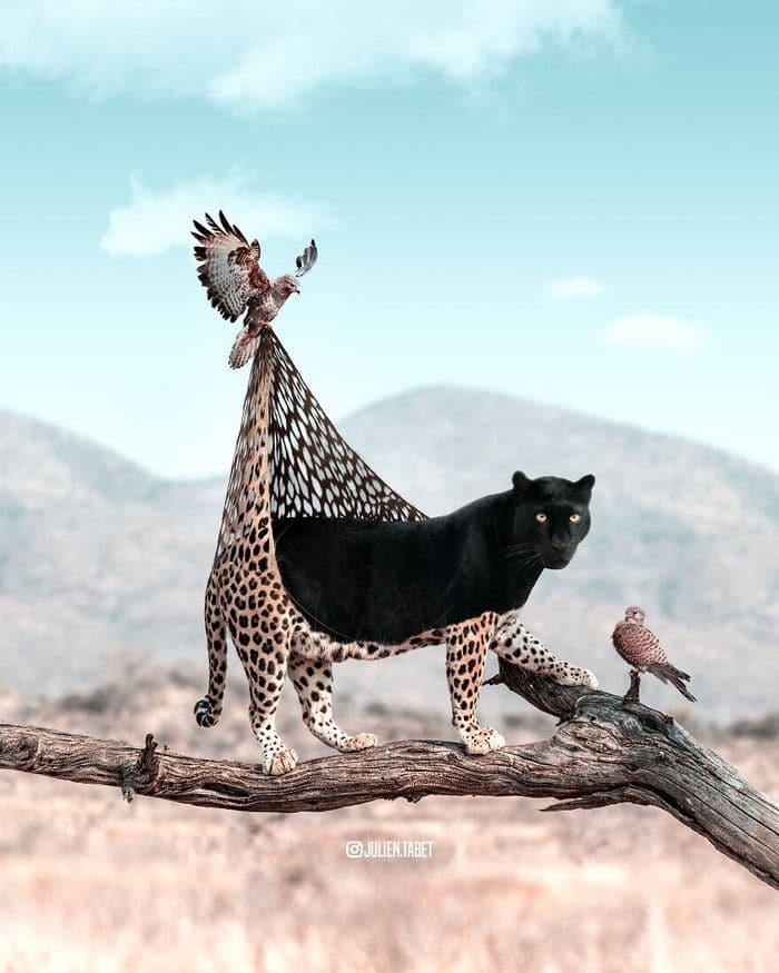 Aqui está o que eu imagino que os animais fazem quando não estamos olhando 27