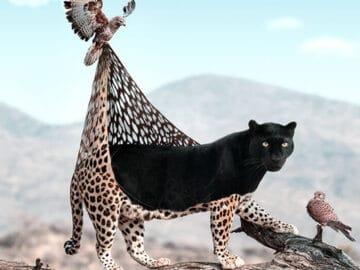 Aqui está o que eu imagino que os animais fazem quando não estamos olhando 32