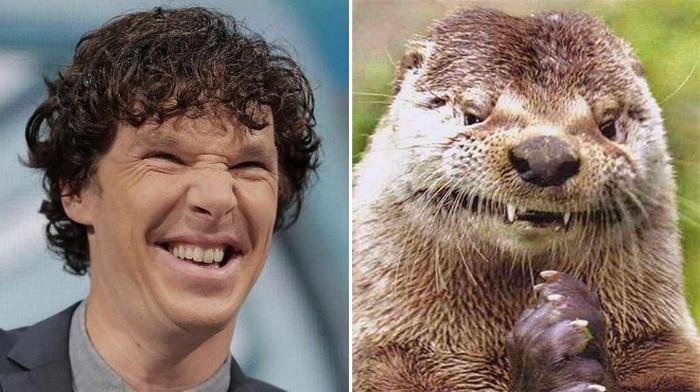 Rumores confirmados: Benedict Cumberbatch é realmente uma lontra 3
