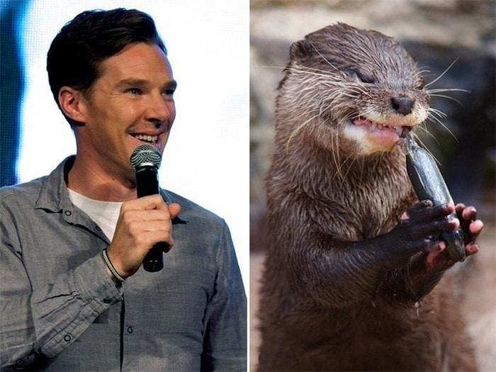 Rumores confirmados: Benedict Cumberbatch é realmente uma lontra 4