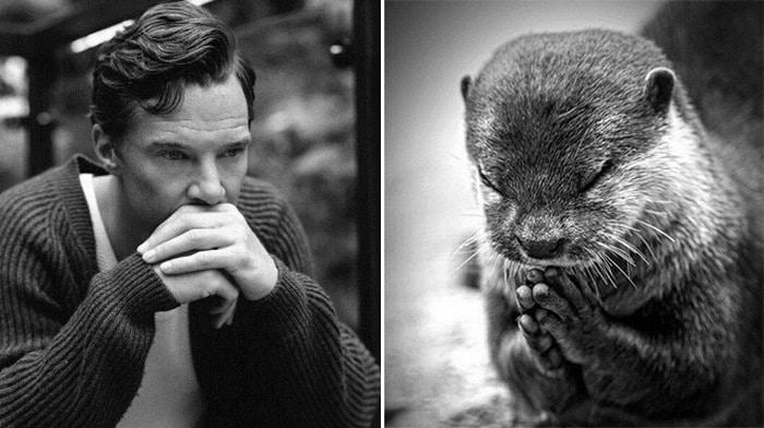 Rumores confirmados: Benedict Cumberbatch é realmente uma lontra 5