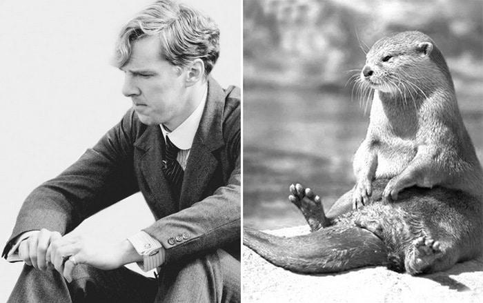 Rumores confirmados: Benedict Cumberbatch é realmente uma lontra 7