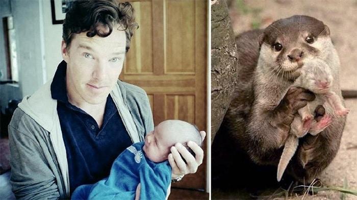 Rumores confirmados: Benedict Cumberbatch é realmente uma lontra 8