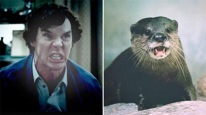 Rumores confirmados: Benedict Cumberbatch é realmente uma lontra 10
