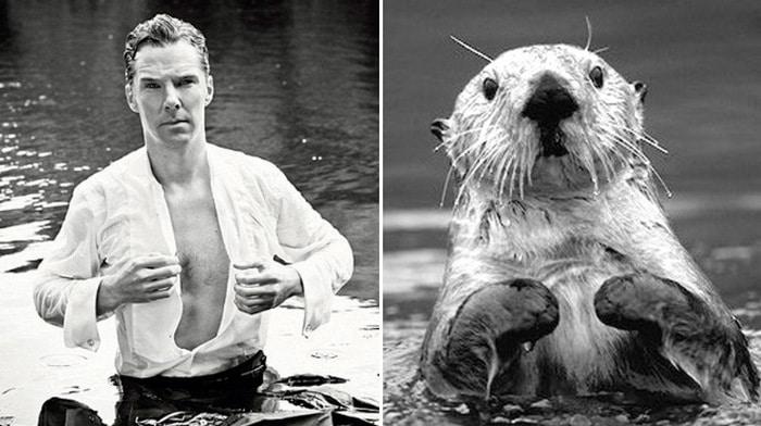 Rumores confirmados: Benedict Cumberbatch é realmente uma lontra 11