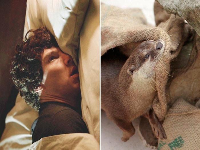 Rumores confirmados: Benedict Cumberbatch é realmente uma lontra 12