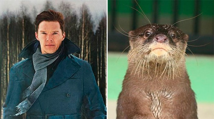 Rumores confirmados: Benedict Cumberbatch é realmente uma lontra 13