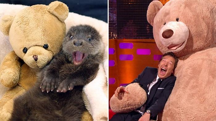 Rumores confirmados: Benedict Cumberbatch é realmente uma lontra 14