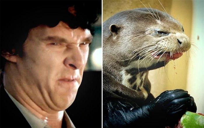 Rumores confirmados: Benedict Cumberbatch é realmente uma lontra 15