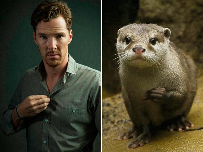 Rumores confirmados: Benedict Cumberbatch é realmente uma lontra 16