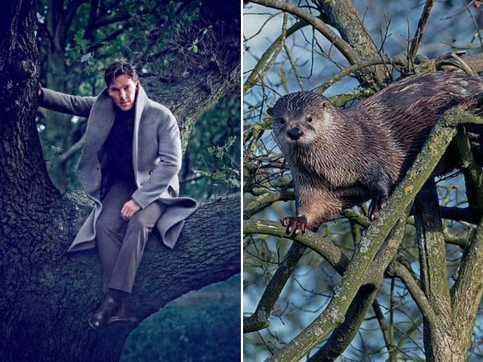Rumores confirmados: Benedict Cumberbatch é realmente uma lontra 17