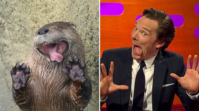 Rumores confirmados: Benedict Cumberbatch é realmente uma lontra 20