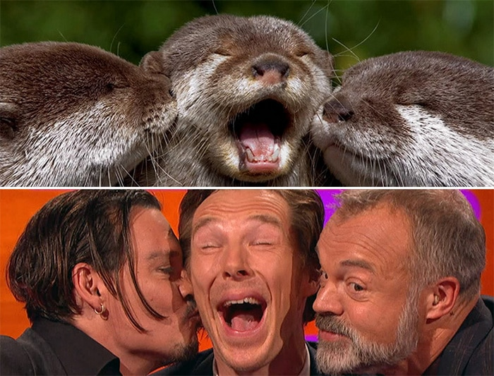 Rumores confirmados: Benedict Cumberbatch é realmente uma lontra 21
