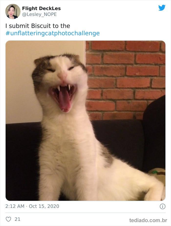 30 das fotos de gatos mais engraçadas do Desafio de fotos de gatos 2