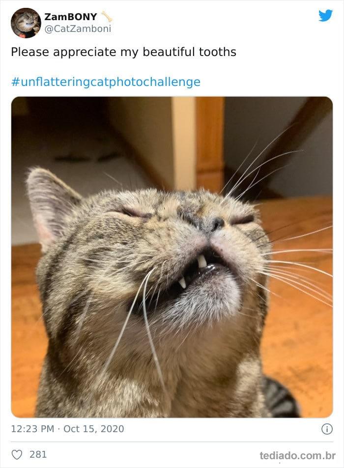30 das fotos de gatos mais engraçadas do Desafio de fotos de gatos 4