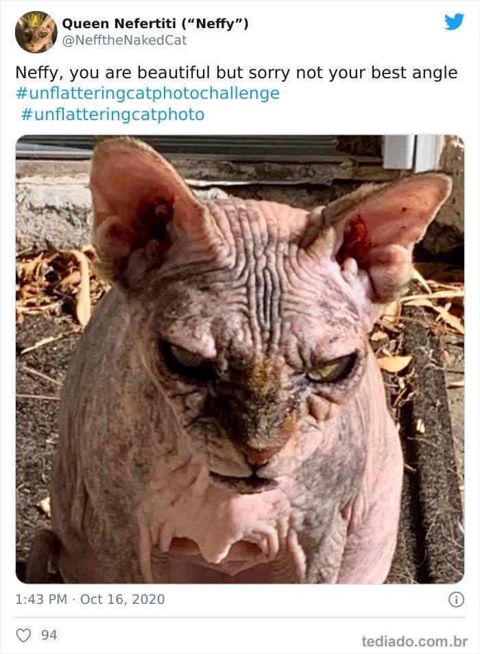 30 das fotos de gatos mais engraçadas do Desafio de fotos de gatos 5