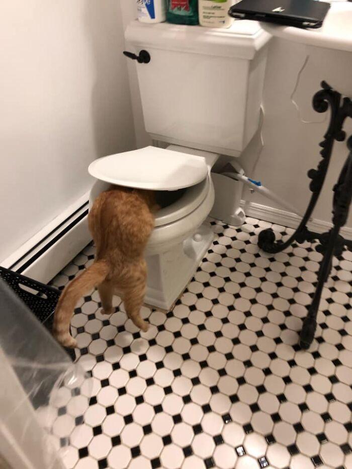 30 das fotos de gatos mais engraçadas do Desafio de fotos de gatos 8