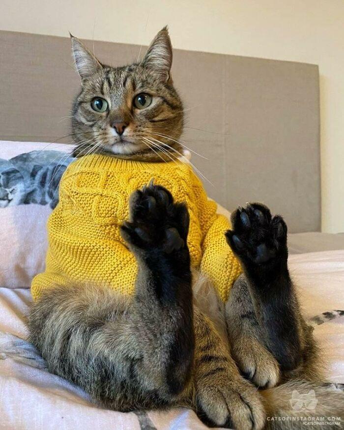 30 das fotos de gatos mais engraçadas do Desafio de fotos de gatos 23