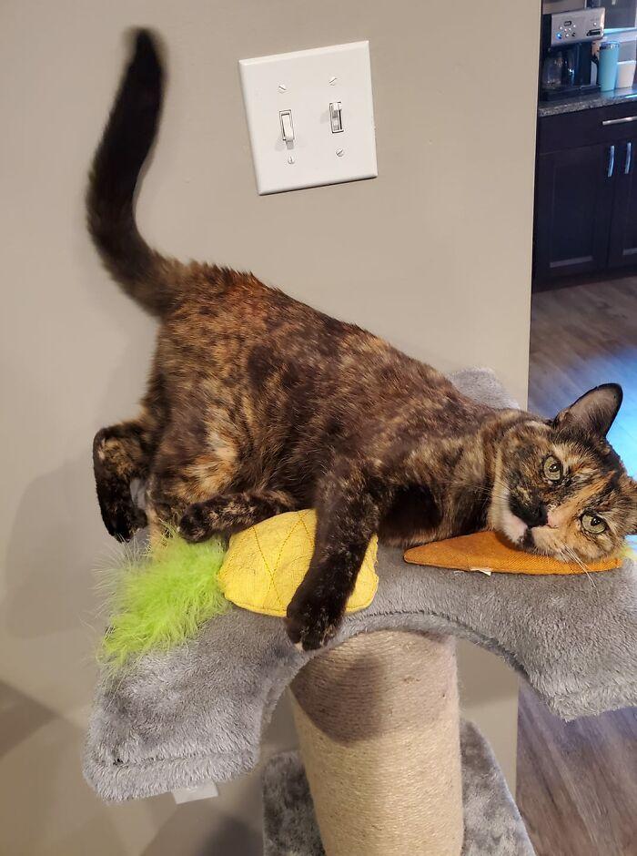 30 das fotos de gatos mais engraçadas do Desafio de fotos de gatos 24