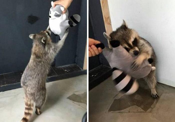 35 fotos de animais de estimação que recusa de separar de seus brinquedos favoritos 5