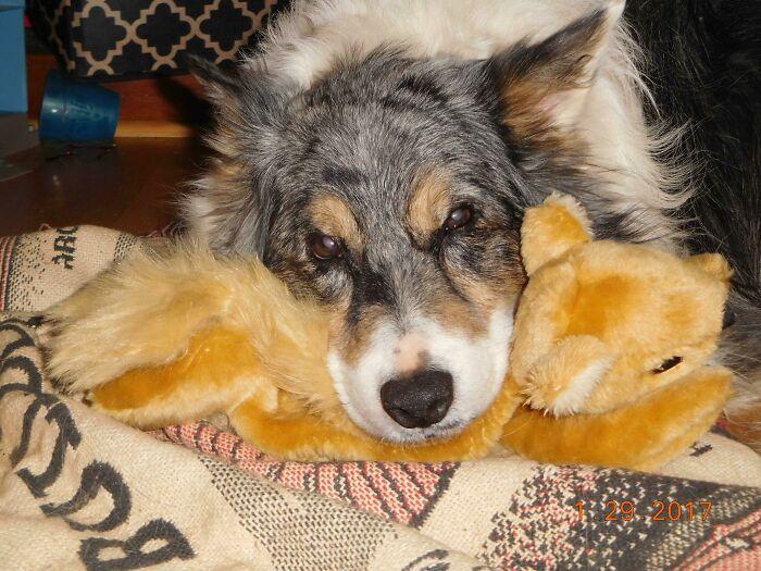 35 fotos de animais de estimação que recusa de separar de seus brinquedos favoritos 21
