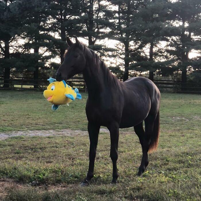 35 fotos de animais de estimação que recusa de separar de seus brinquedos favoritos 23