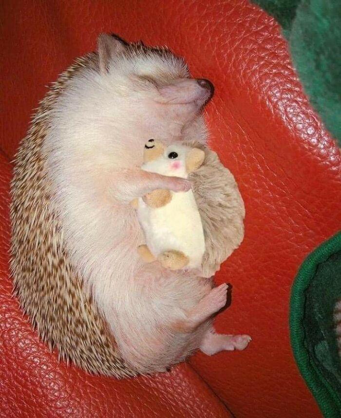 35 fotos de animais de estimação que recusa de separar de seus brinquedos favoritos 24