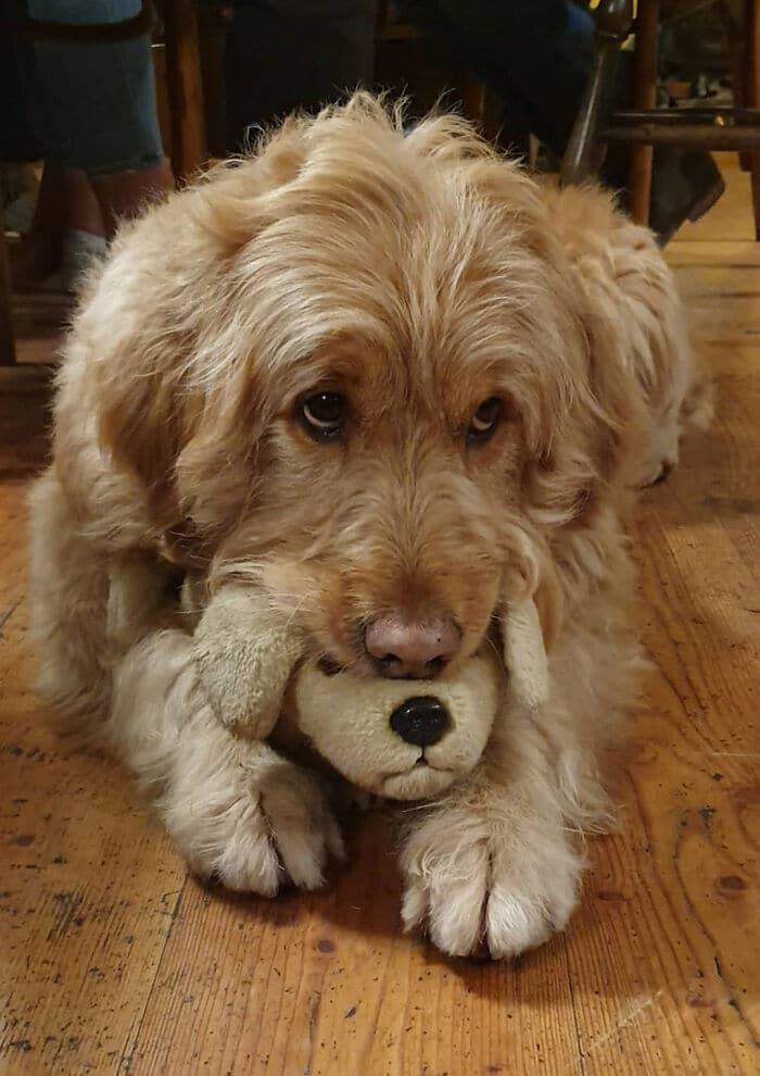 35 fotos de animais de estimação que recusa de separar de seus brinquedos favoritos 28