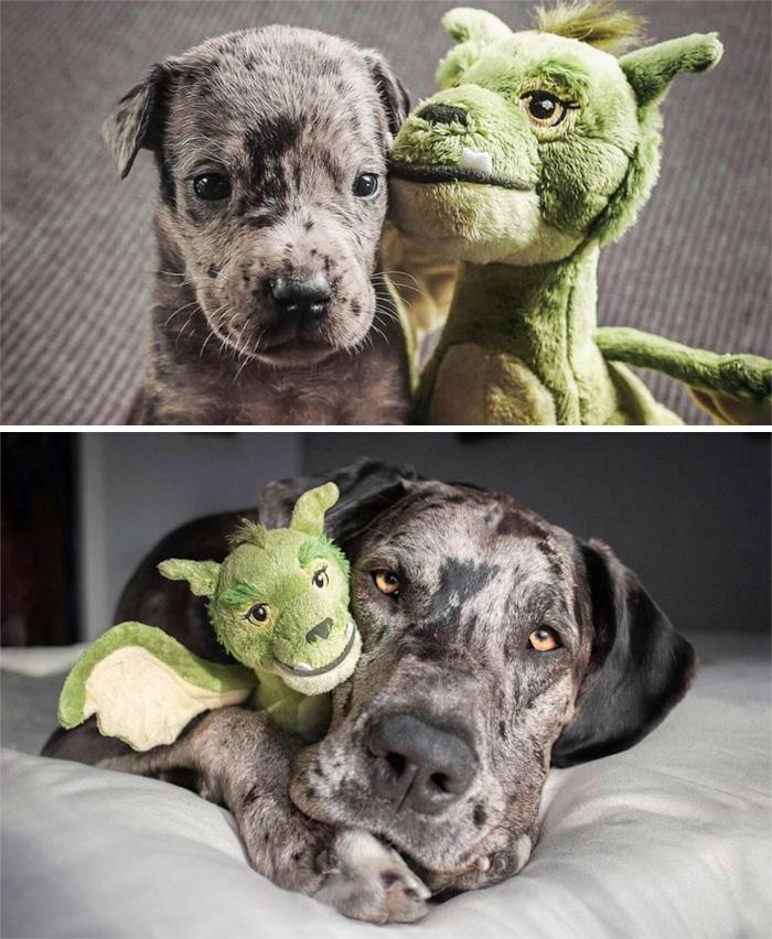 35 fotos de animais de estimação que recusa de separar de seus brinquedos favoritos 30